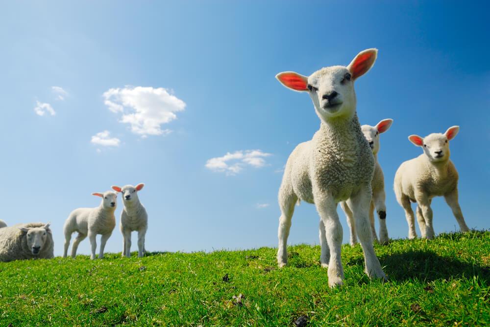 agrarisch groene belangenbehartiger