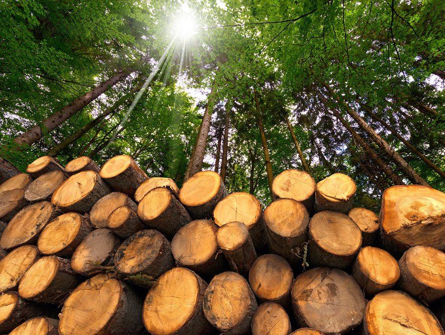 resthout en bos zorgen voor grote hoeveelheid biomassa